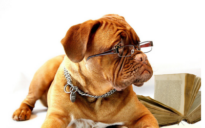 image for Coming soon… Friday June 23 is Take Your Dog to Work Day!