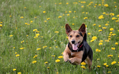 image for Fitness Trackers for Pets